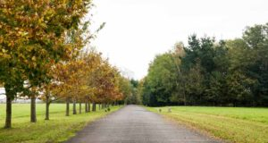 Our tree lined drive surrounded by green fields leading to our workshop.